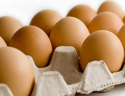 Penyebab Turunya Produksi Telur