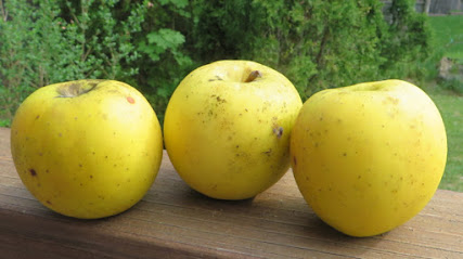 Goldrush apples