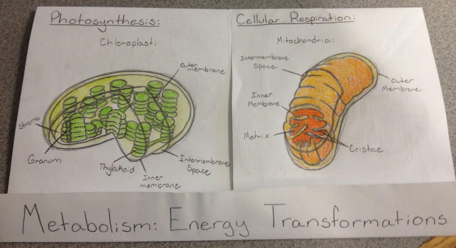 Maryanne S Science Class Ideas