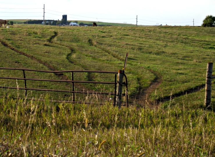 cattle trail cow path dirt trail through pasture grass by fence
