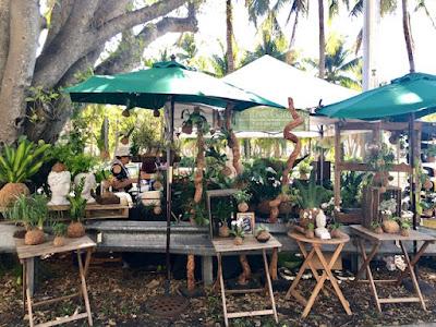 tropical plants on sale