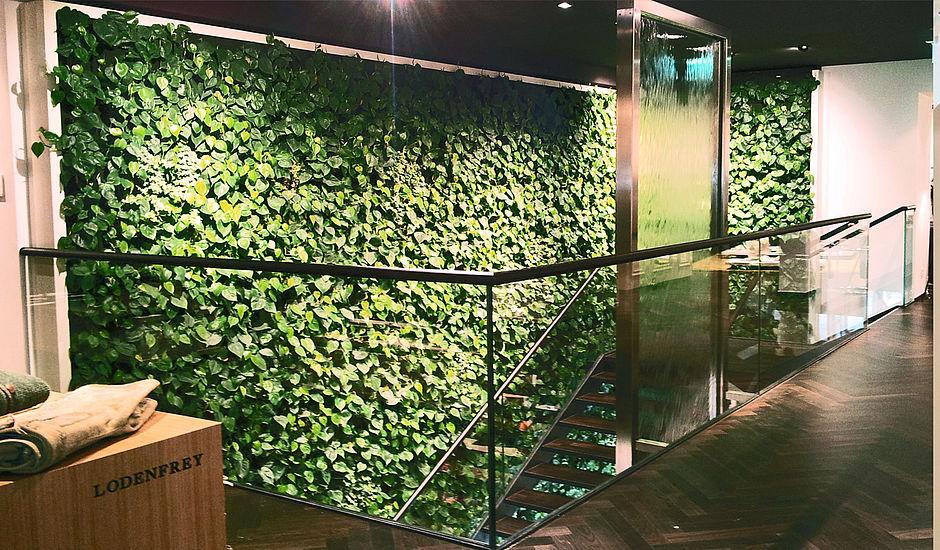 Decorando Com Arte E Criatividade Plantas Resistentes A Ambientes Fechados