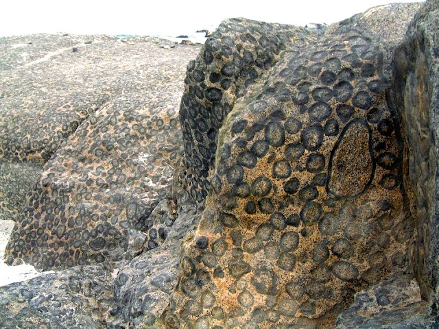 Orbicular Granite