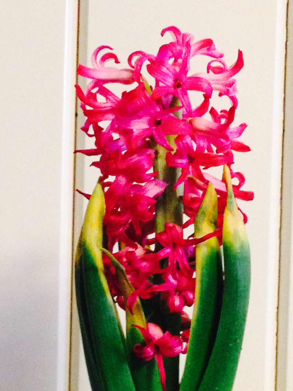 Anderson Layman's Blog: Beauty...................