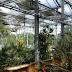 Haalbaarheidsonderzoek afvalwaterzuivering met plantenkassen