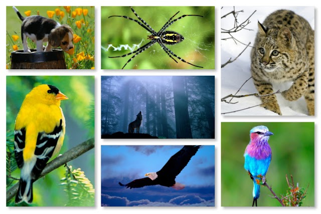 Wallpapers fauna HD - Pack 3