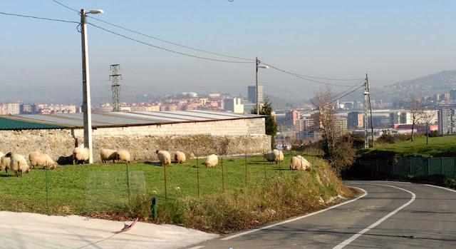 Las ovejas pastan junto al vertedero donde está confinado el lindane