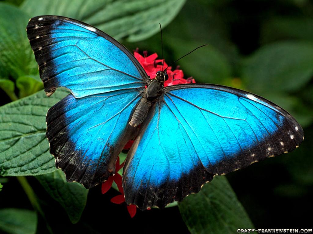 Beautiful Butterfly Photos ~ 521 Entertainment World