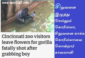 Cincinnati zoo Gorilla killed video, tamil news, rare videos in tamil, siruvanai kaakka gorillavai kondraar kaavalaali,
