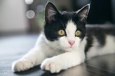 25 Fakta Menarik Tentang Kucing, Si Hewan Lucu dan Menggemaskan