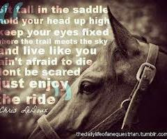 Equestrian For Life Good Horse Sayings