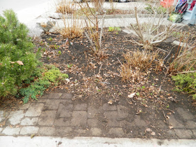 Toronto Leslieville Spring Front Yard Cleanup After by Paul Jung Gardening Services--a Toronto Gardening Company