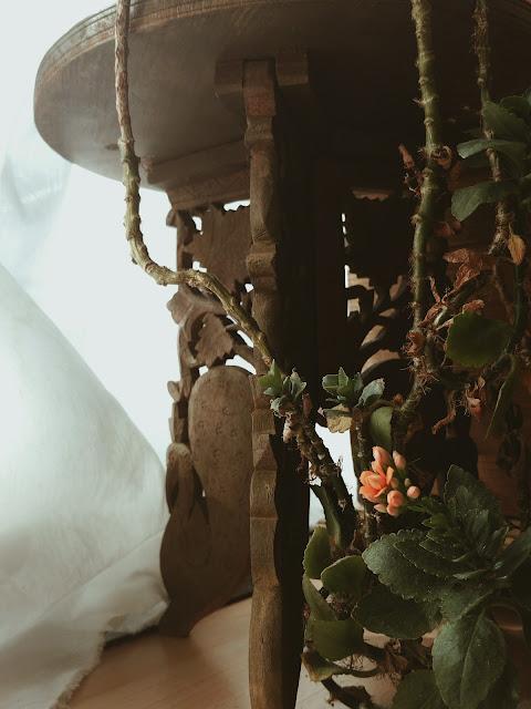 vertrocknete Pflanze blüht