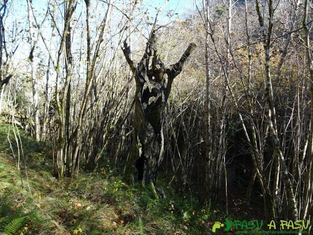 Árbol en la ruta de Beyu Pen