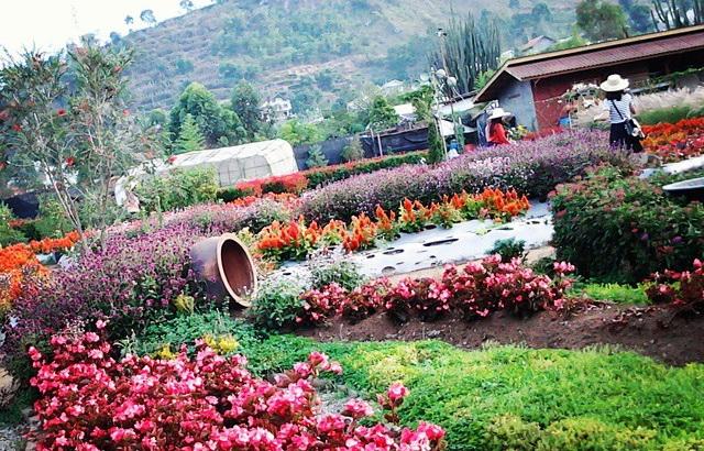 Tempat Wisata Kebun Begonia Di Lembang