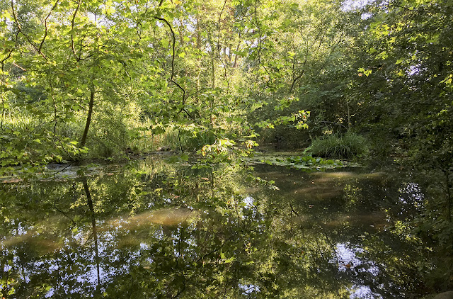 Pond Wood.  Walk round the Hawkwood Estate 34, 30 August 2016