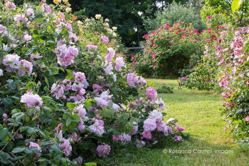 Jardin de rosas en Piamonte