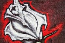 Semua Posting Tentang Graffiti Gangster Rose Drawing Ada Dihalaman