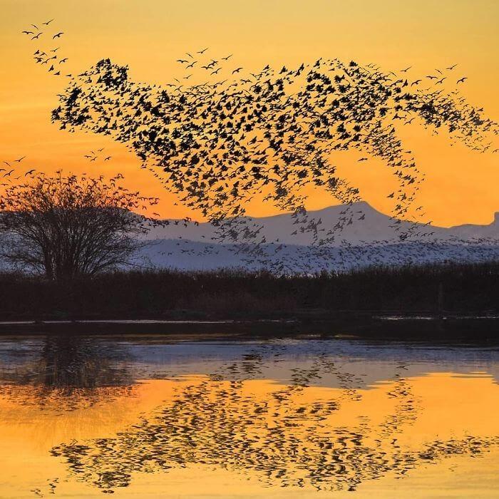 05-Leopard-Birds-Archipelago-Martijn-Schrijver-www-designstack-co