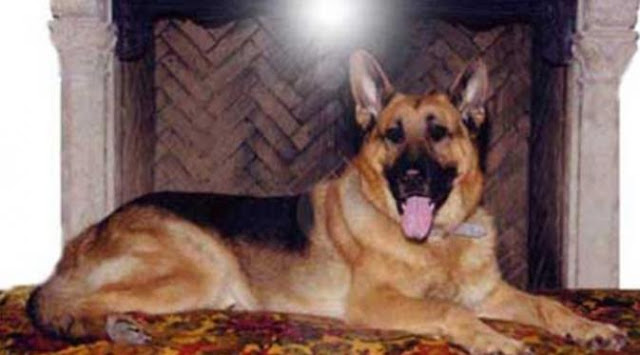 Anjing Gunther IV mendapatkan warisan dari Karlotta Lieberstein