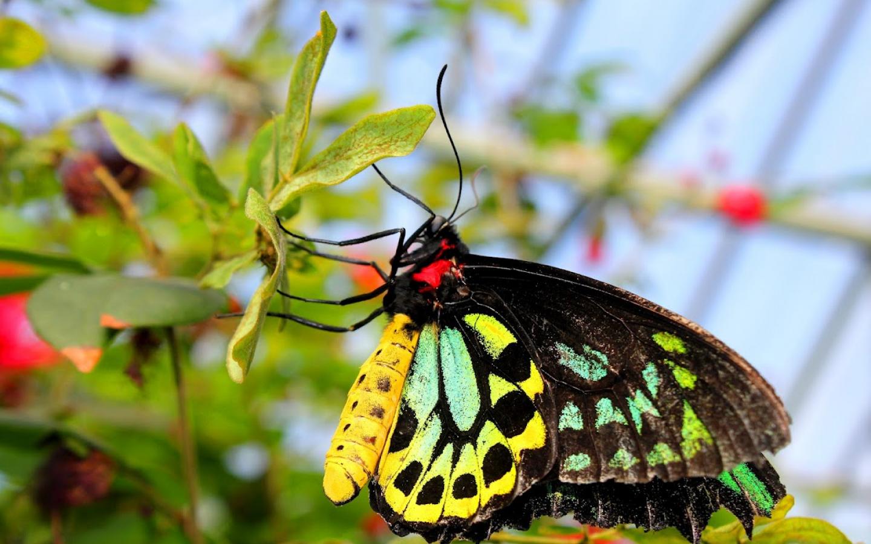 Linkamigratis 20 sfondi desktop farfalle 1440x900 for Immagini farfalle per desktop