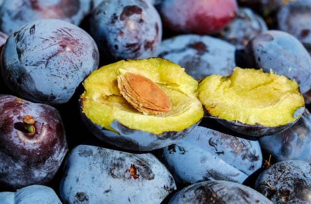 Nggak perlu takut dengan penyakit kardiovaskuler, plum adalah solusi dari penyakit ini