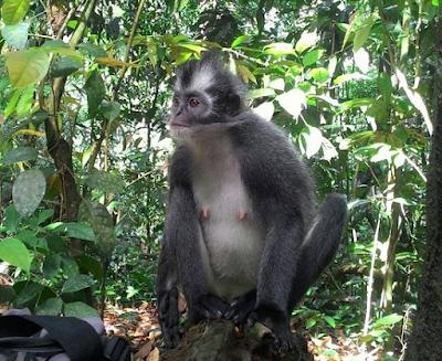 Bukit Lawang, North Sumatera4