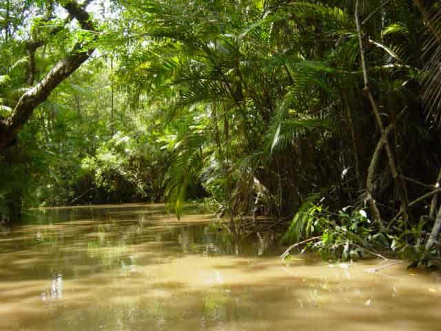 Snakes: Snakes In The Rainforest