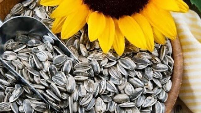 Info Kesehatan! Manfaat biji matahari untuk kesehatan