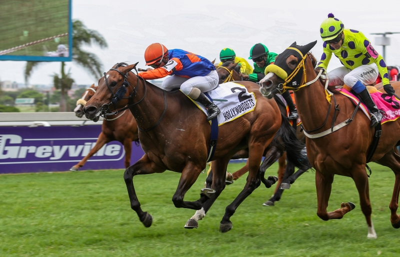 LOVE THEME - horse racing at Hollywoodbets Greyville