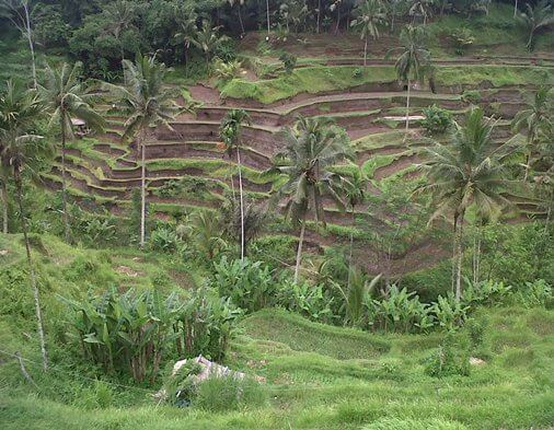 Tegalalang Rice Terrace in Ubud Gianyar Bali