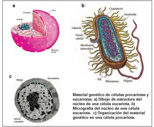 Anecdotario Biológico