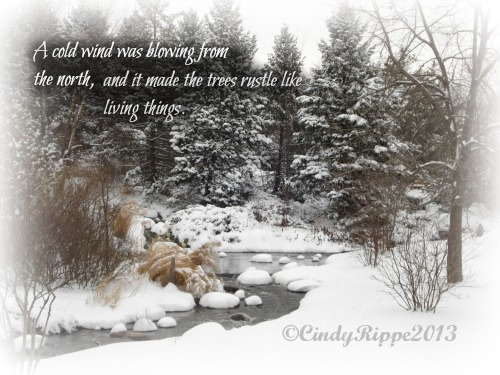 Snow in the Woods, Snow Storm, Snow Day, Beautiful Snow, End of Winter, Florals, Family, Faith, Cindy Rippe