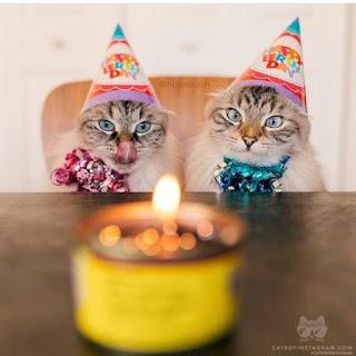 happy birthday brother cat