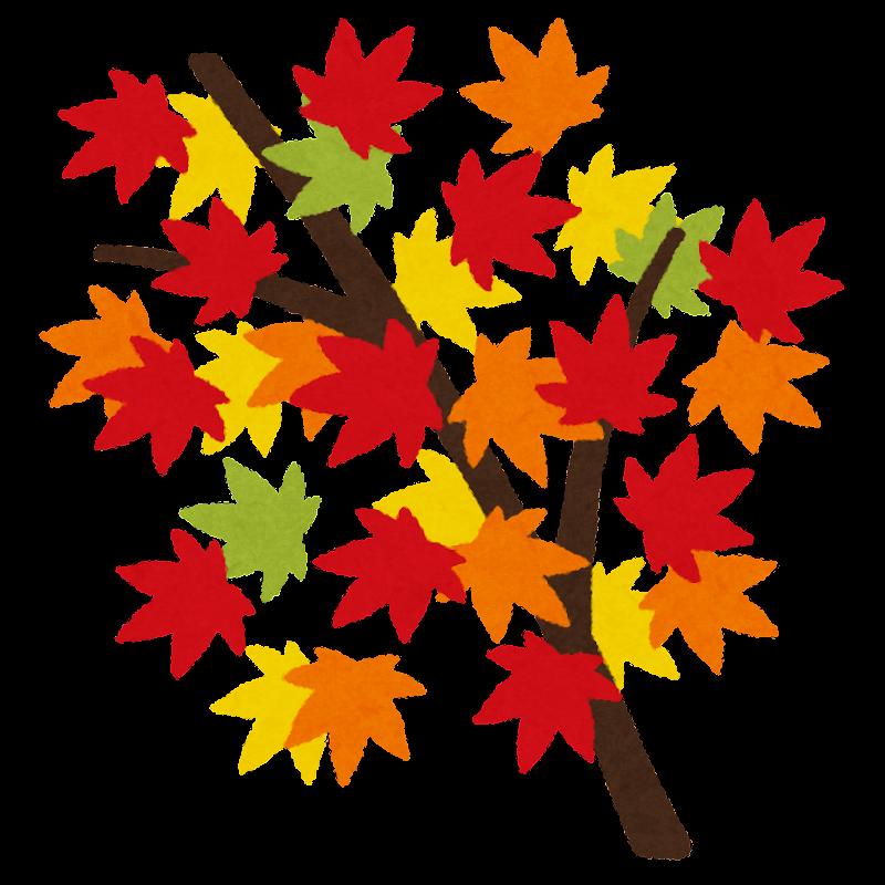 紅葉したもみじのイラスト枝つき かわいいフリー素材集 いらすとや