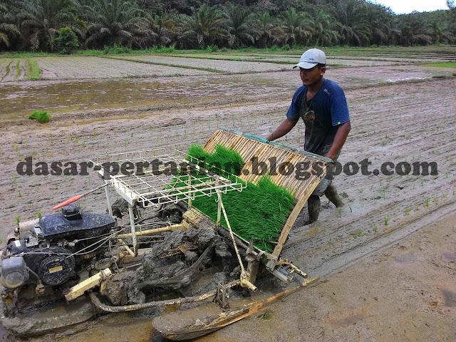 Menanam padi dengan sistem mesin