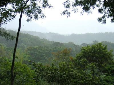 Resultado de imagen para compromiso para proteger los bosques