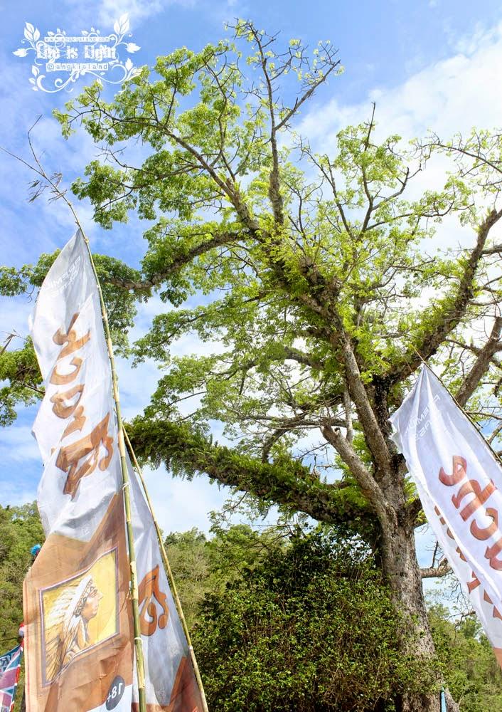 pohon pantai sadeng