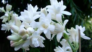 anh hoa hue trang