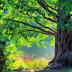 Puisi Alam Dari Sebatang Pohon Tua
