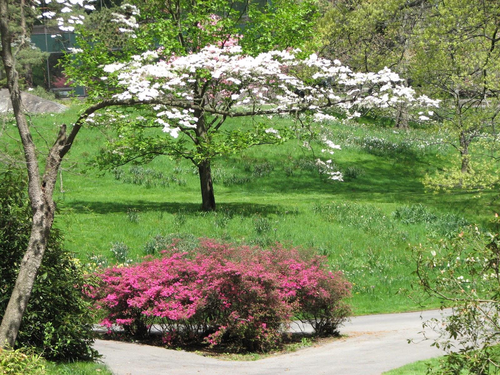 Bonao internacional jardin botanico de nueva york for Arboles jardin botanico