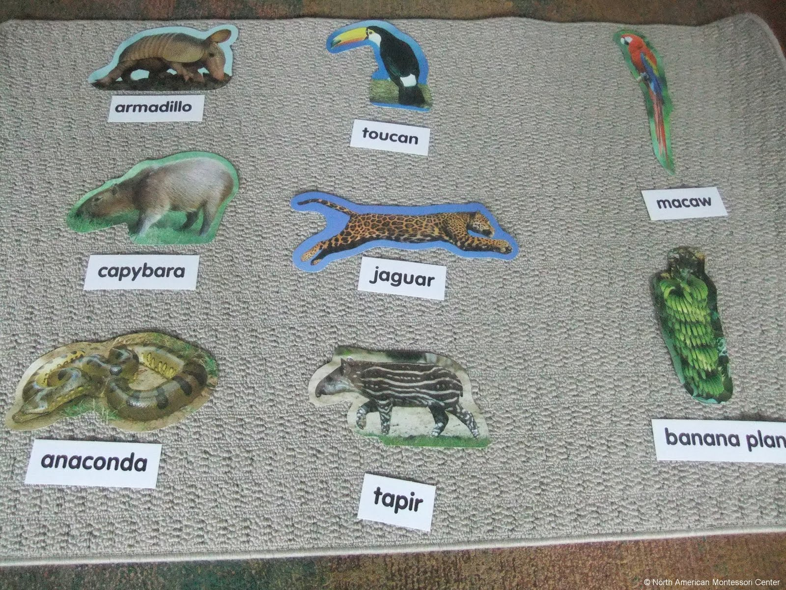 NAMC montessori preschool classrooms curriculum activities south america animal names