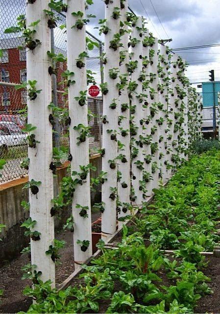Chab'Blog: Chab'Brico : Planter Des Fraises En Hauteur !