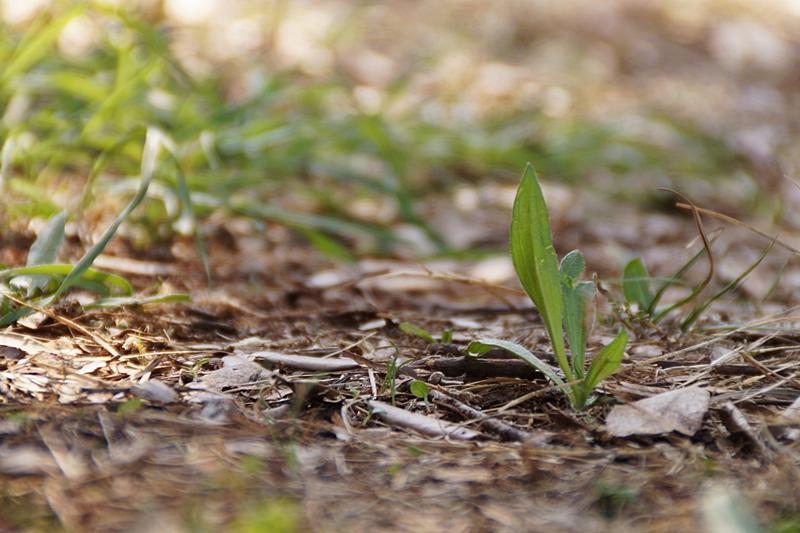 Unkraut Boden Krotien Sommerurlaub Urlaub Bokeh Schärfentiefe Natur Fotografie Sommer