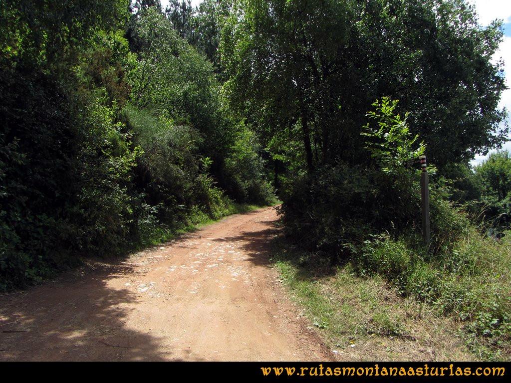 Ruta Cangas - Acebo: Desvío hacia el pinar.