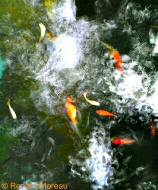 An interesting snapshot of fish from an overhead position.