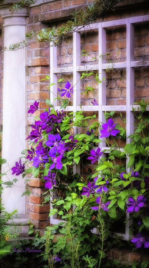 Home garden 40 inspirations pour un jardin anglais for Plantes pour jardin anglais