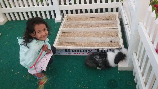 Main Bersama Kelinci di Mall Cipinang