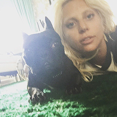 The National Dog Day Lady Gaga