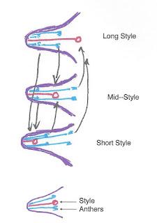 trystyla sketch